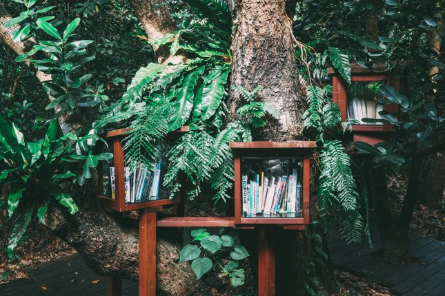 Photo of trees growing around boxes with books